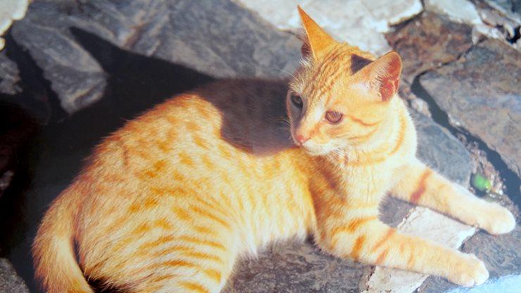 Katze verweilt gemütlich auf einem Steinboden