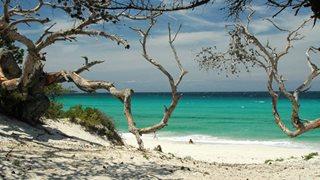Naturbelassener korsischer Sandstrand mit weißem Sand und türkisem Meer