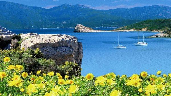 Blühende Blumen wachsen neben dem Meer und Bergen auf Korsika