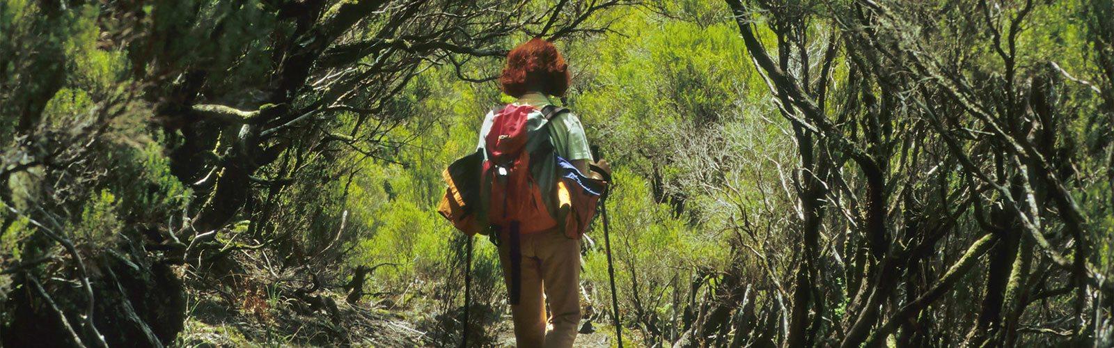 Madeira Wanderreisen Individuelle Rundreise Inklusive Flug Unterkunft