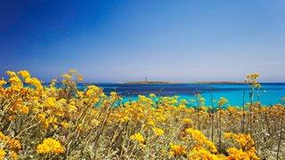 Gelbe Blumen schmücken die menorquinische Küste